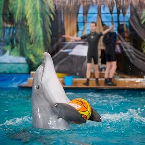 Дельфинарии, океанариумы Иноземцево