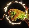 Цирки в Иноземцево