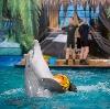 Дельфинарии, океанариумы в Иноземцево