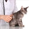 Ветеринарные клиники в Иноземцево